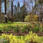 Parkhill Terrace gardens